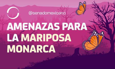 Photo of Amenazas para la mariposa monarca