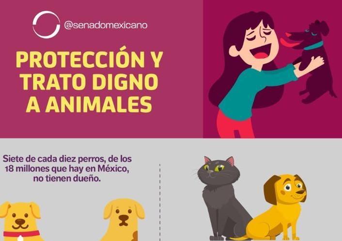 Photo of Protección y trato digno a animales