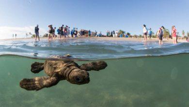 Photo of Tenistas y público del Abierto Mexicano se unen a liberación de tortugas en Acapulco