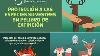 Photo of Protección a las especies silvestres en peligro de extinción