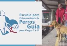 Photo of Escuela para Entrenamiento de Perros Guía para Ciegos I.A.P.