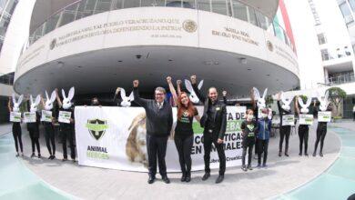 Photo of ¡Basta de pruebas cosméticas en animales!; Mañana Senado prohibirá esta práctica: Ricardo Monreal